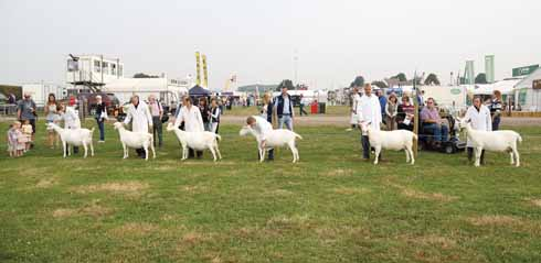 Years of breeding and preparation go into being ready for the judging in any of the categories