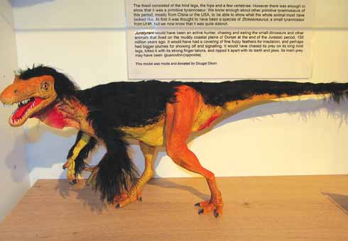 The world's only scale model of a Juratyrant, made and donated to Wareham Museum by Dougal Dixon