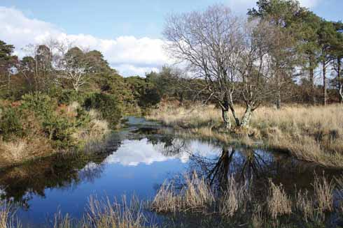 Bomb-crater pond at Arne