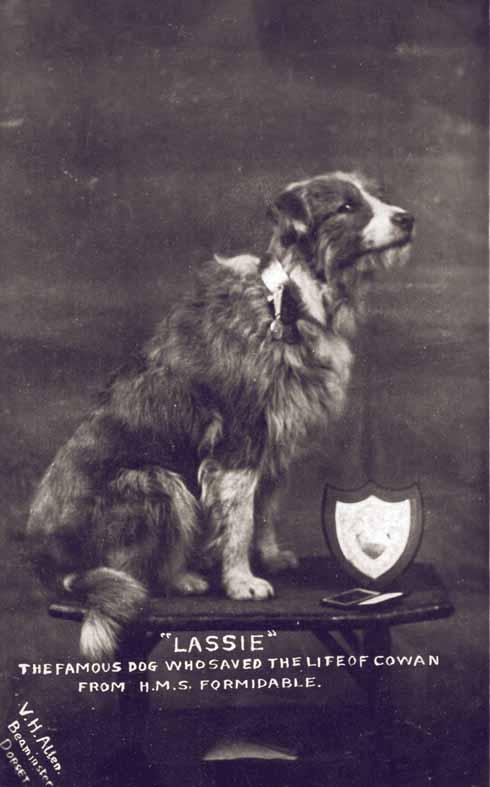 A commemorative picture postcard of the original Lassie