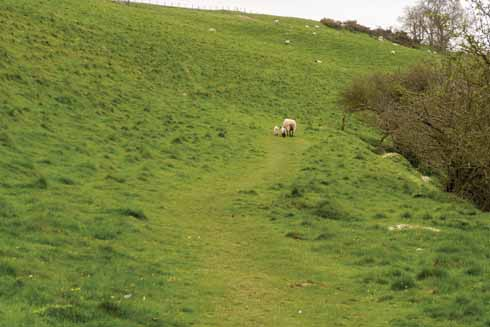There is plenty in the way of livestock on the walk, so please keep dogs on leads