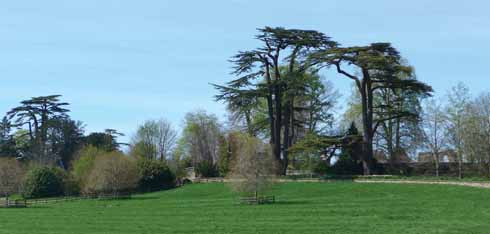 Cedars at Sherborne Castle