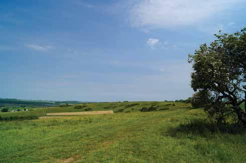 Ridgeway over Pentridge Down