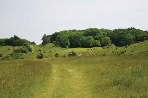 Bokerley Ditch towards Grim's Ditch
