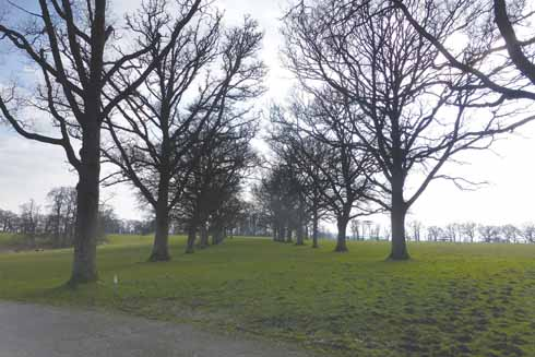 The avenue in which artisan makers exhibit at the annual Oak Fair