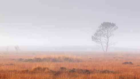 As with the silver birch shot, the colours that there are in this image of Hartland Moor in Purbeck are accentuated by the monochromaticity of the misty skyline