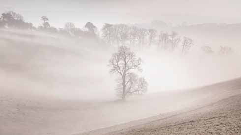 This shot at Toller Down, emphasises a characteristic of mist: to soften winter trees' stark silhouettes. It also shows how the mist collects in the well of the valley and dissipates as the landscape opens up.