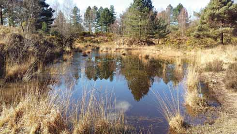 The ponds at Stephen's Castle are a paradise for aquatic life