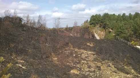 Five acres of the reserve were destroyed in a fire in April 2015