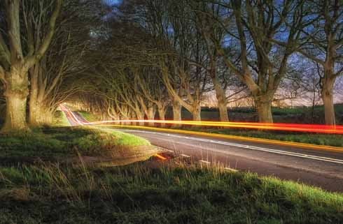 Beech Avenue at Kingston Lacy, partly illuminated by the vehicle's headlights  and partly painted over by its tail-lights