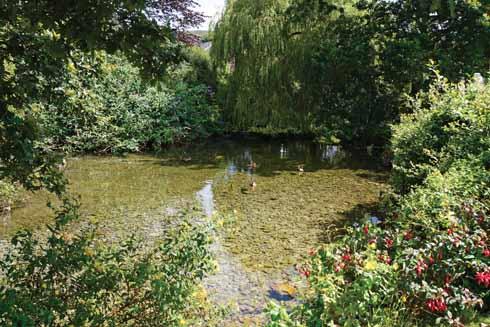 Portesham's lovely  village pond