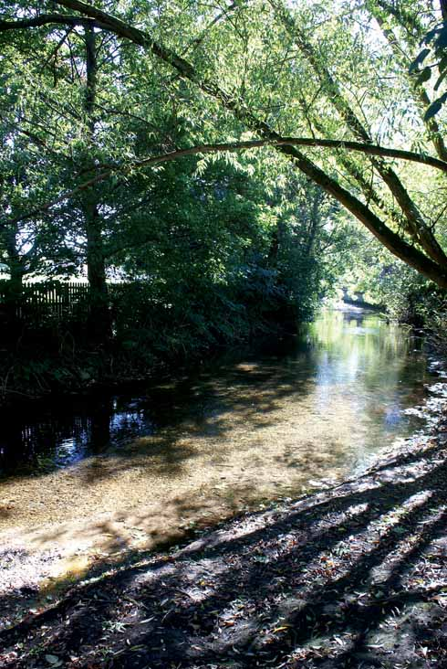 There are riverside views aplenty in Wimborne. This is of the River Allen near the Co-op car park