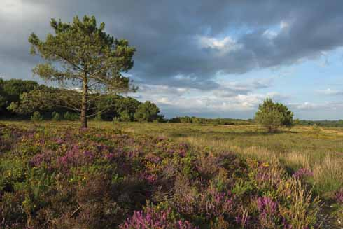 Upton Heath under stormy skies. Heathland is one of the most threatened environments in the UK (image: Mark Heighes)