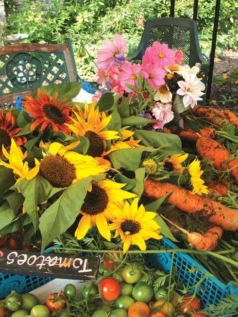 617EdBlandford_Vic Gdn harvest