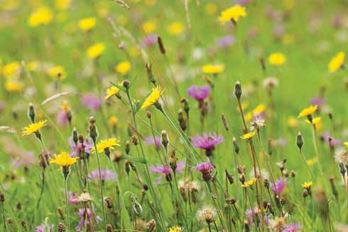Wildflowers abound in a Kingcombe field