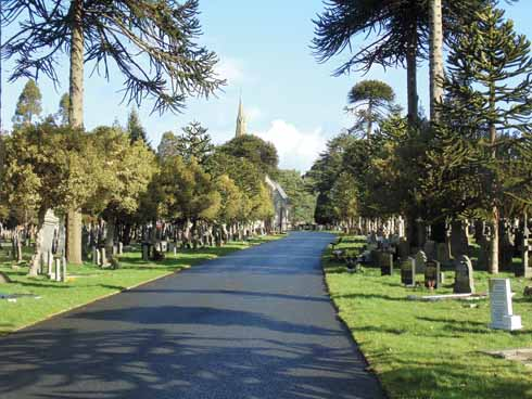 The avenue of araucaria araucana and golden hollies which Cutler, as a member of the Burial Board planted after he had ripped out fifty 'ugly and poisonous' laurel trees at Wimborne Road Cemetery