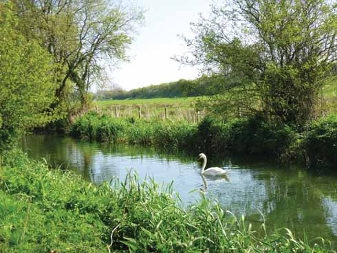 A swan moves gracefully against a breeze on the River Allen (Amanda Broom)