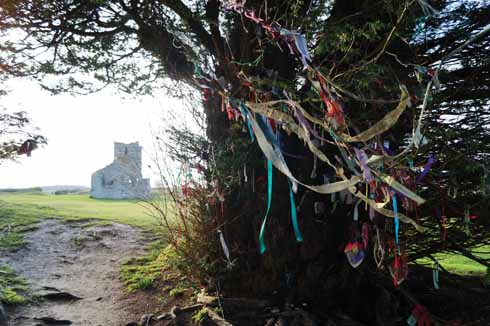 A yew tree at the Knowlton earthworks, bedecked with  memorial ribbons