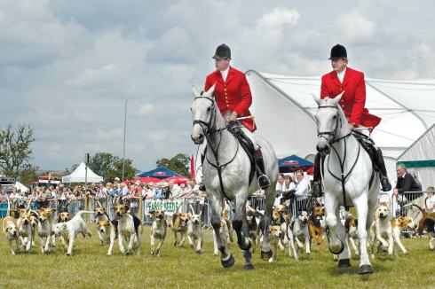 4	The hounds seem to enjoy their traditional parade as much as the spectators do!