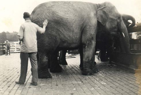 Wimborne station was used to seeing locomotives taking on water, but here a circus elephant quenches its thirst in the station yard