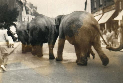 The indistinctness of this old photograph is worth it for the extraordinary sight of elephants walking trunk-to-tail up Wimborne High Street